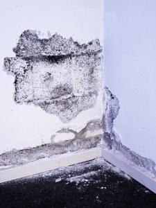 Feuchtigkeitsschaden im Keller