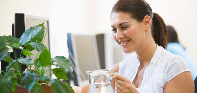 Zimmerpflanzen beeinflussen die Luftqualität