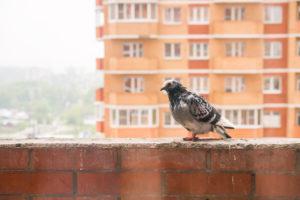 Taubenkot greift die Bausubstanz an