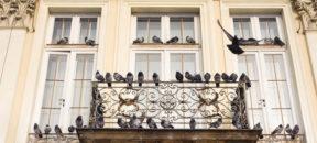 Auf Taubenabwehr kann selten verzichtet werden